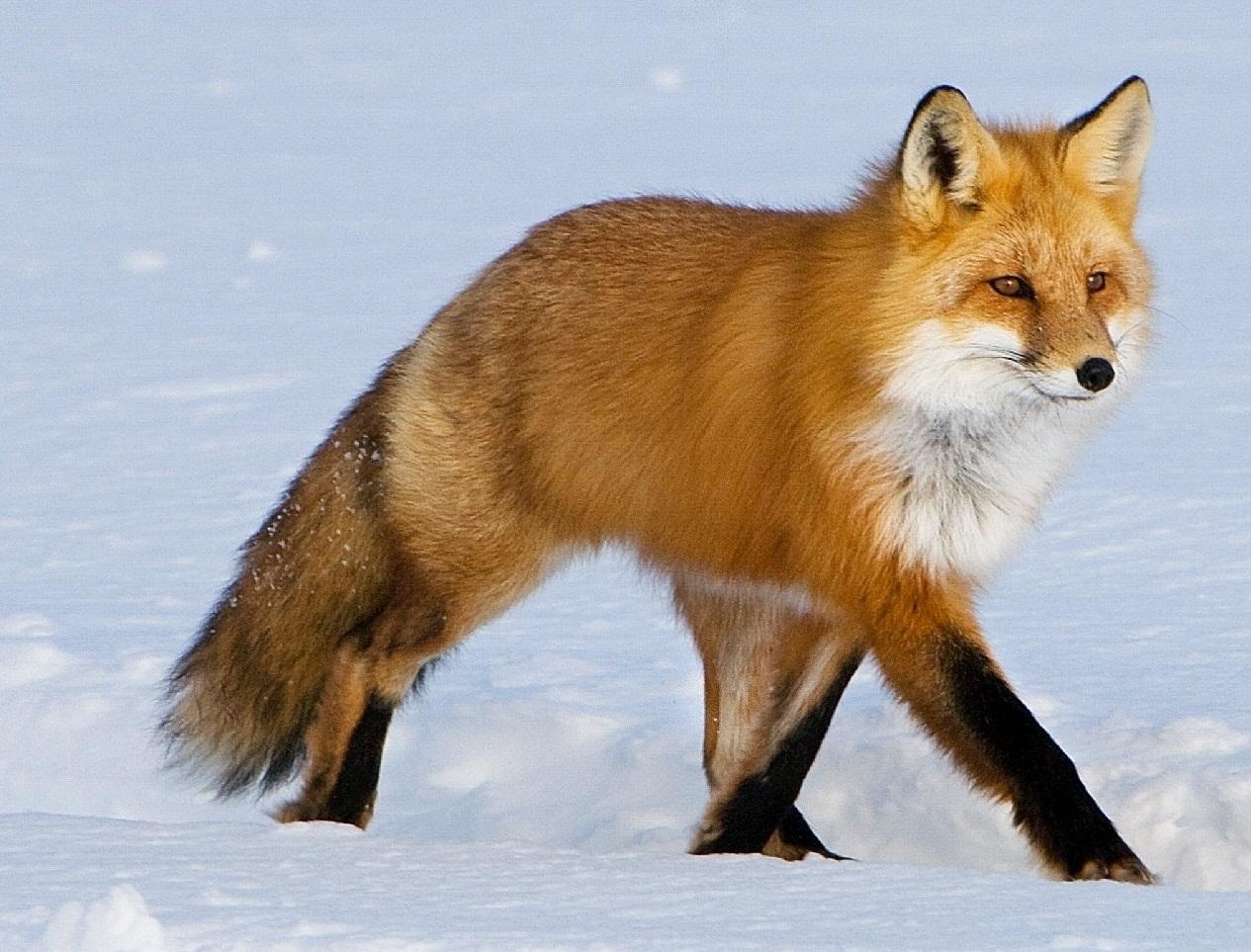 картинка к загадкам о диких животных