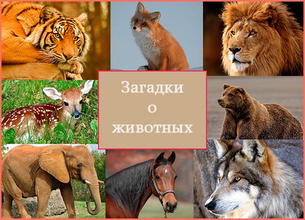 коллаж для загадок о животных