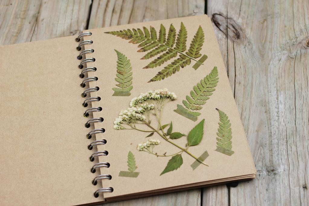 как засушить листья в книге