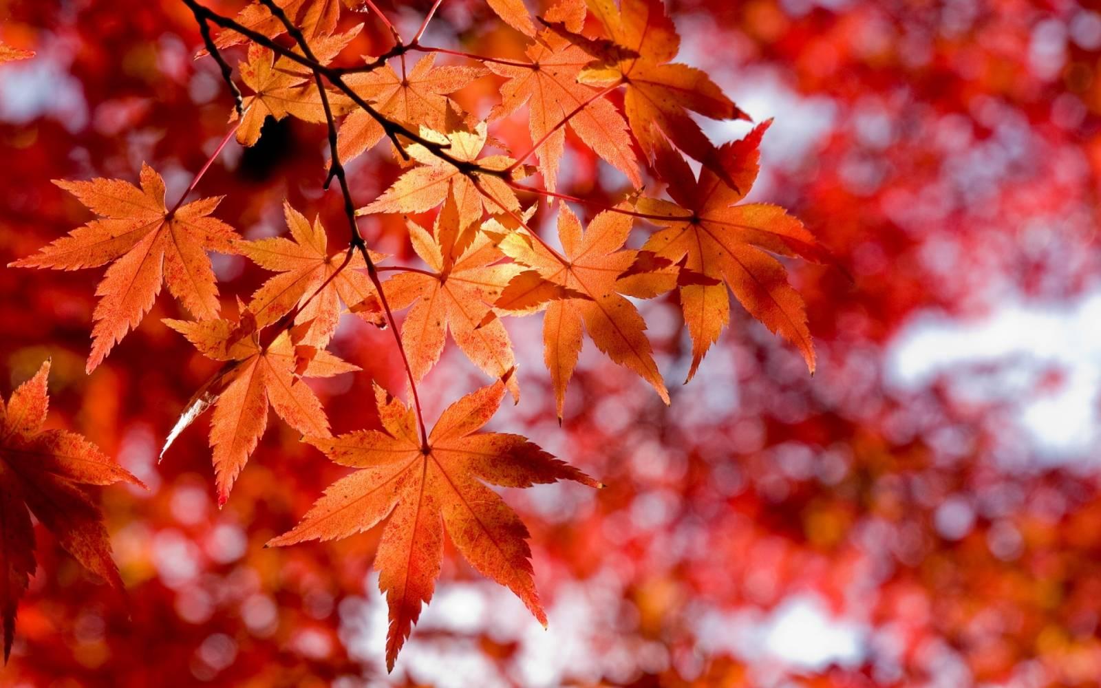 листья для засушивания
